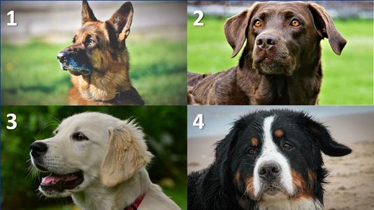 Pubquiz vraag over honden